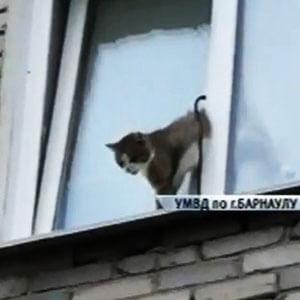на картинке кошка лезет в окно