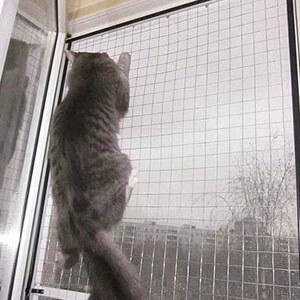 кошка на форточной решётке