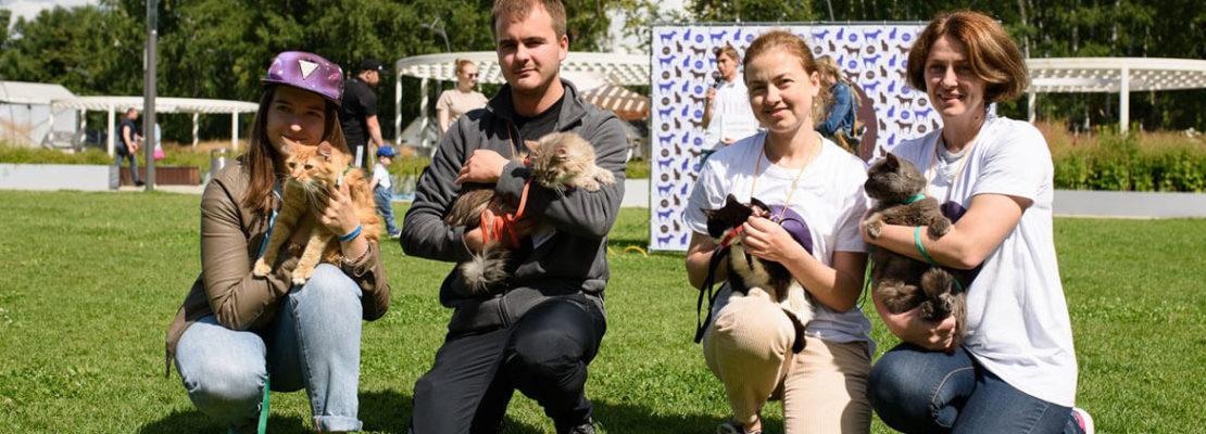Волонтеры в приют для животных Москва