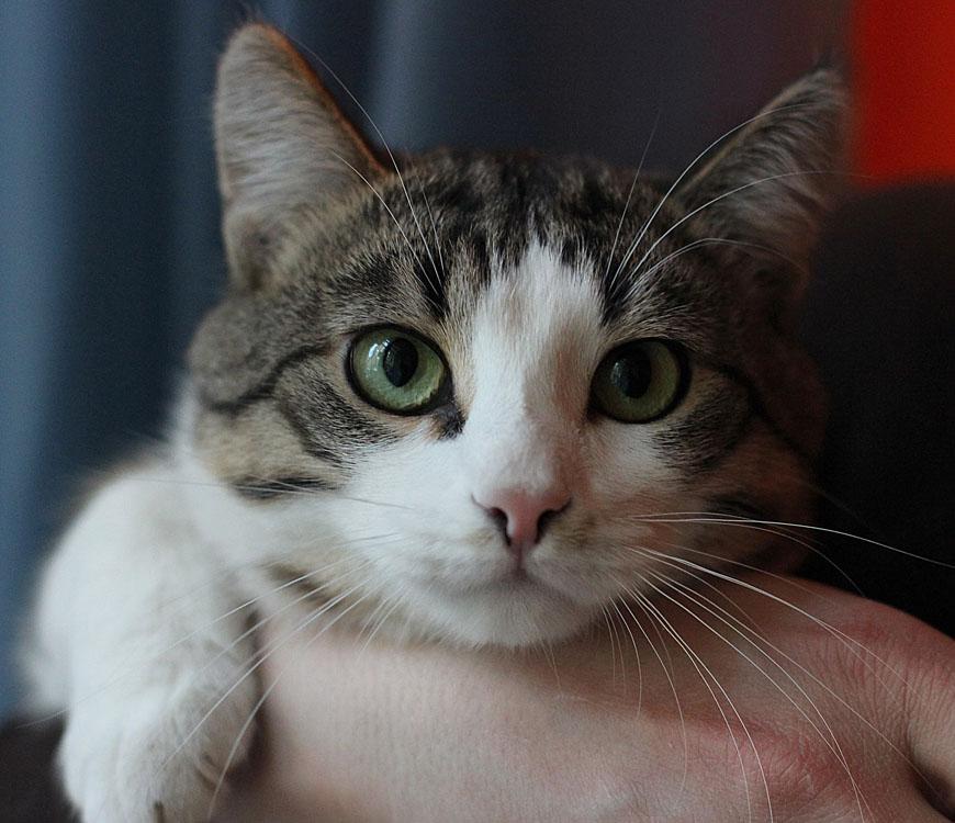 Тимон, 1 год