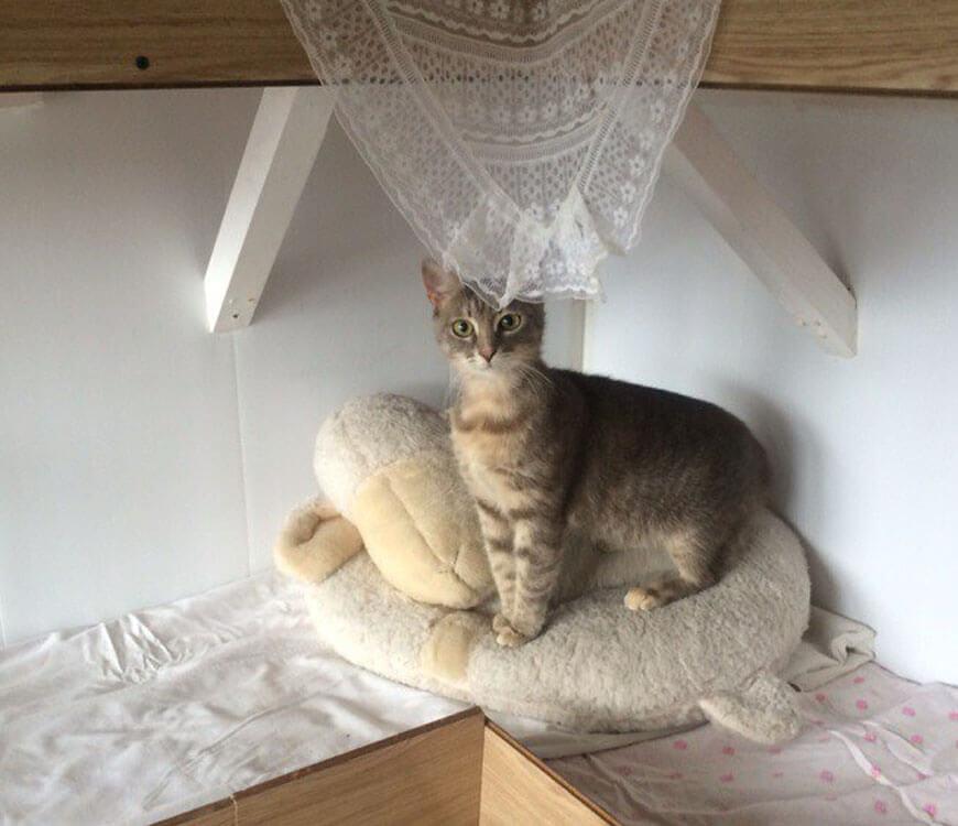 ЛАСКА, 7 месяцев
