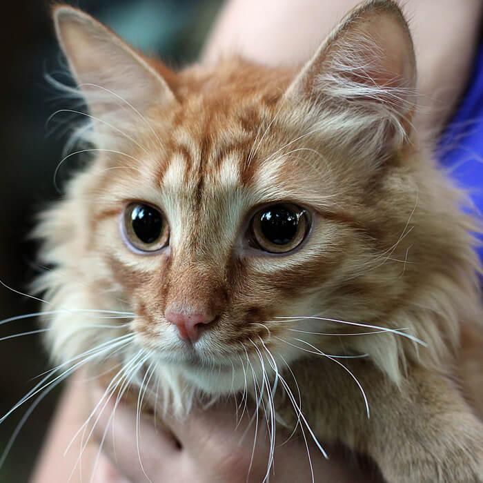 Котя, 1 год