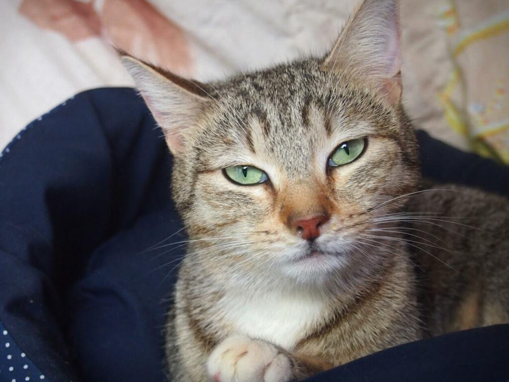 Оливка, 2 года