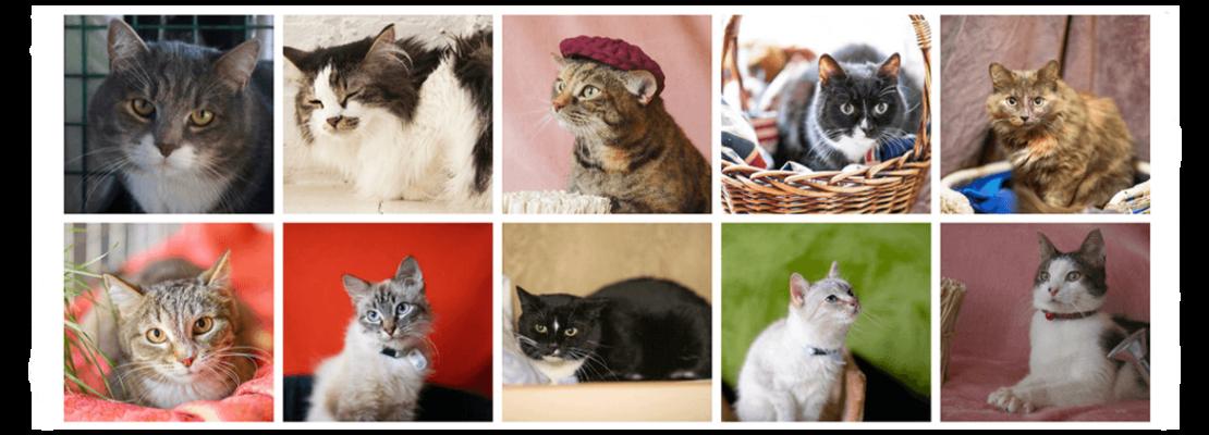 приют для бездомных кошек в печатниках